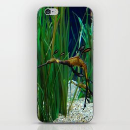 Weedy Sea Dragon iPhone Skin
