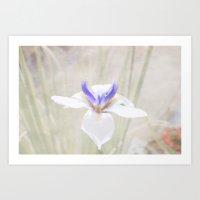 iris Art Prints featuring Iris by Judith Lee Folde Photography & Art