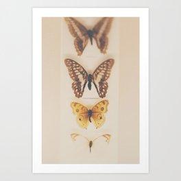 Change ... from caterpillars to butterflies Art Print
