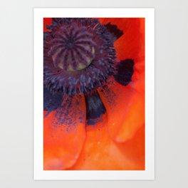 Poppy Close-Up Art Print
