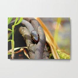 Resting Black Snake Metal Print