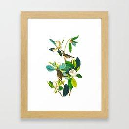 Warbling Flycatcher Bird Framed Art Print