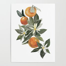 oranges and flowers Poster