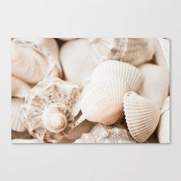 Sea snails and molluscs empty shells Canvas Print