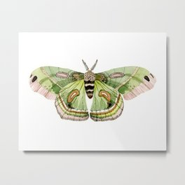 Green Cecropia Moth Metal Print