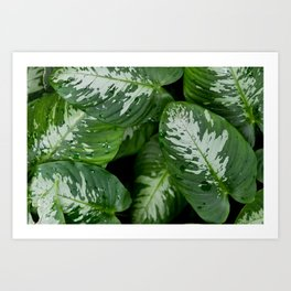 Leaf Patterns Art Print