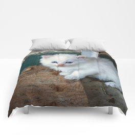 White Kitten Comforters
