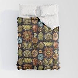 Ernst Haeckel Sea Squirts Ascidiae Black Background Comforters