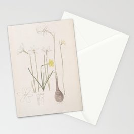 Flower 022 narcissi Narcissuses28 Stationery Cards