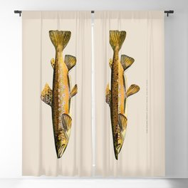 The Brown Trout Blackout Curtain