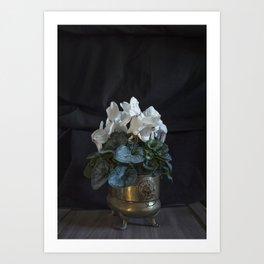 Flower: White Cyclamen Art Print