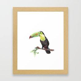 Watercolor Jungle Toucan Bird Illustration Framed Art Print