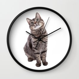 Cute Tabby Cat Looking Up Wall Clock