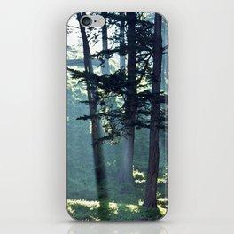 Trees In The Fog iPhone Skin