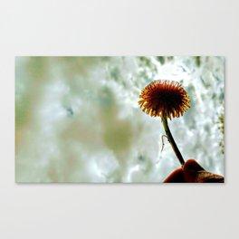 A Dandelion in my Grasp Canvas Print