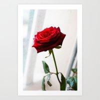 Rose of Valentine's day Art Print