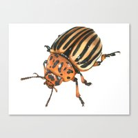 insect Canvas Prints featuring Insect by Chiara Martinelli Creations