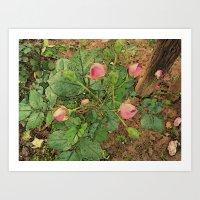 Des Roses Art Print