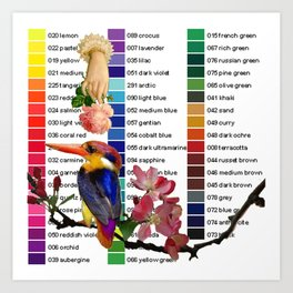 Colour Chart with Kingfisher Art Print