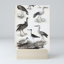 011 Tinamus Silisicolas Andalusian Turnis Horned Screamer Coromanded Anastome American Rhea Blackwinged Longshanks9 Mini Art Print