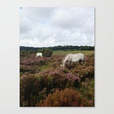 New Forest Wild Horses Canvas Print
