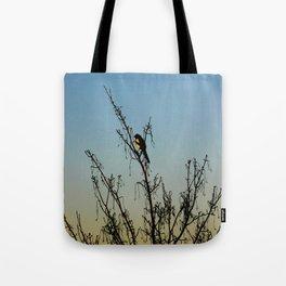 Evening song bird at sunset Tote Bag