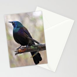 Yonder  (Common Grackle) Stationery Cards