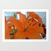 Flowers Lily Petals orange Art Print