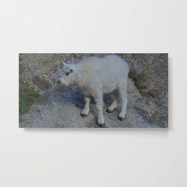 Baby mountain goat in the Rocky Mountains Metal Print