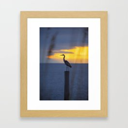 Blue Heron at Sunrise Framed Art Print