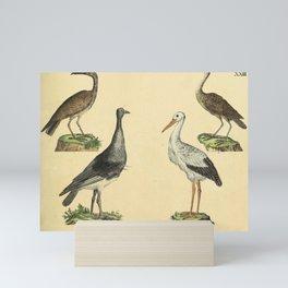 056 scopus umbretta Horned Screamer White Stork10 Mini Art Print