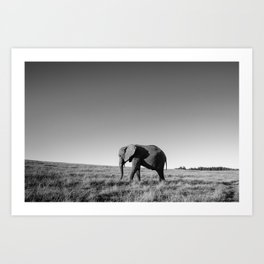 Lone female elephant walking along African savanna Art Print