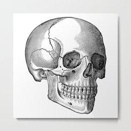 Skull 2 Metal Print