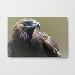 Eagle Eye II Metal Print