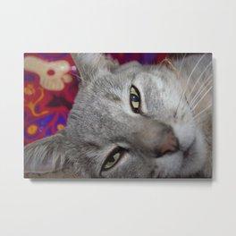 Lazy Cat Metal Print