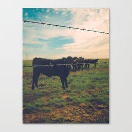 West Texas Cows Canvas Print