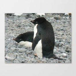 Adelie Penguins, Antarctica 2006 Canvas Print