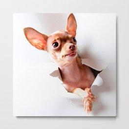 Chihuahua  dog  Tearing Through Metal Print