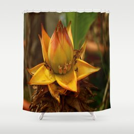 Musella Lasiocarpa - A Drawf Banana Shower Curtain
