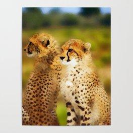 Pair of Cheetahs Poster