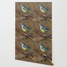 Wildlife Blue tit bird Wallpaper