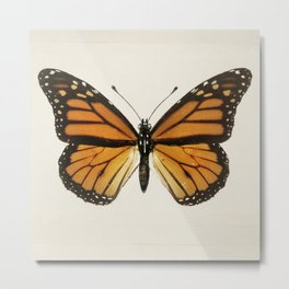 Monarch Butterfly | Monarch Butterflies | Moths and Butterflies of the United States | Vintage Butterflies |  Metal Print