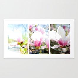 blossom triptych Art Print