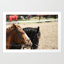Black & Brown Horses Art Print