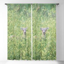 Badlands Lamb - Wildlife Photography Blackout Curtain