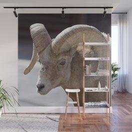 Watercolor Sheep, Bighorn Ram 03, Fall River, RMNP, Colorado, The Ambler Wall Mural