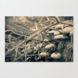 Mushrooms on a stump Canvas Print
