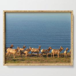 Tule Elk Cows Serving Tray
