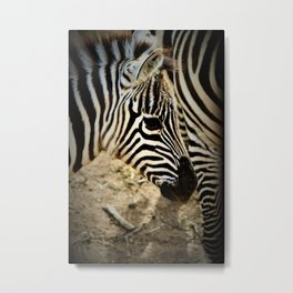 Zebra Stripes by Reay of Light Photography Metal Print