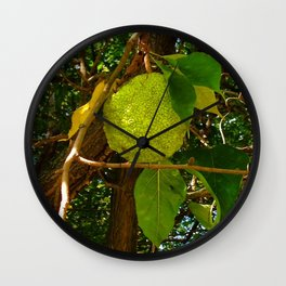 Osage Orange Wall Clock
